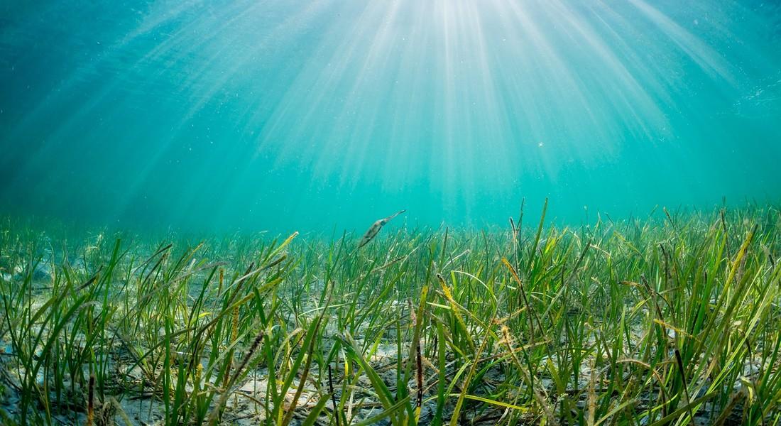 Le alghe: un gruppo eterogeneo